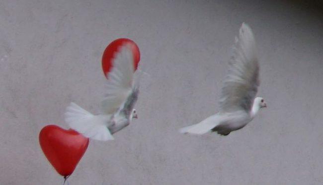 Foto: Sehnsucht nach Frieden
